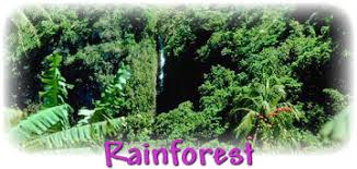 MGBnet Rainforest